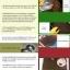 คู่มือการปลูกดาวเรือง, thumbnail 3